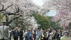 皇居の桜並木を初公開