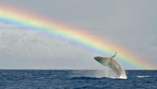 一日がぐっと明るくなるハワイの美しい虹【画像集】