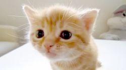 子ネコ、親ネコに怒られてしょんぼりの巻【動画】