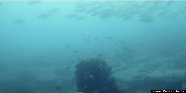 世界の漁場の85%が荒廃:動画