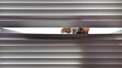 隠れてるつもりだけど隠れられていないネコ26連発