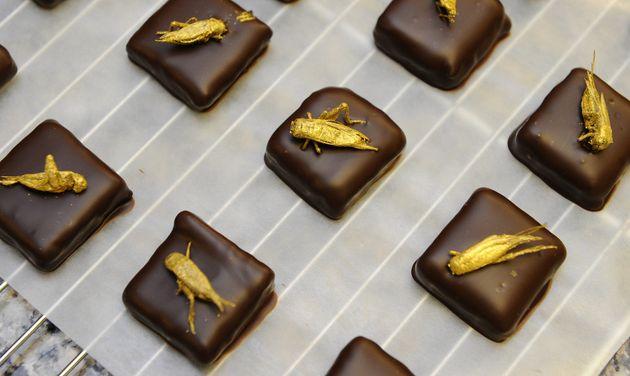 「昆虫トッピング」のオシャレなチョコレート