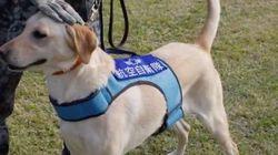 「国を守る犬」自衛隊警備犬、表彰される