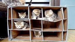 秘密基地に隠れるネコたち【動画】