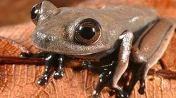 南米スリナムで新種の生物60種を発見