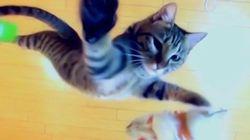 NBA選手にすべき、日本のすごい「ジャンプ猫」