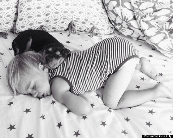 子犬と赤ちゃんのお昼寝写真集