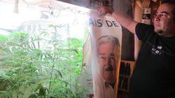 世界初、ウルグアイで大麻合法化