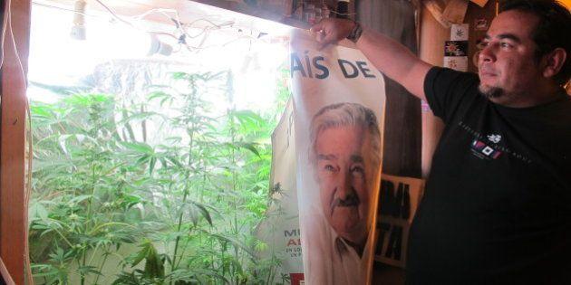 FLORIDA, URUGUAY - OCTOBER 20: Julio Rey, 38, grows a few marijuana plants in a makeshift cabinet, complete...