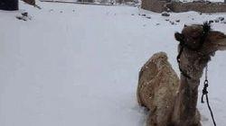 エジプトに数十年ぶりの雪【画像】