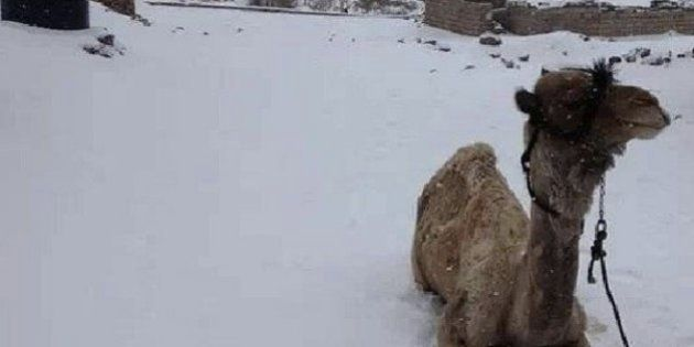 エジプトに雪、数十年ぶり【現地の画像集】