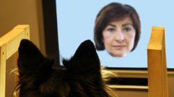 犬は顔写真がわかる:「飼い主の顔」より好きな写真とは?
