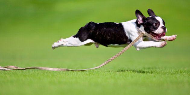 「犬税」導入へ有識者委設置、2014年度内の税導入を目指す 大阪・泉佐野市