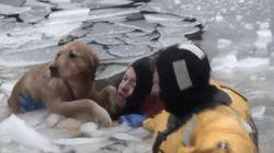 犬を救助するために、消防士が氷の中に飛び込む【動画】