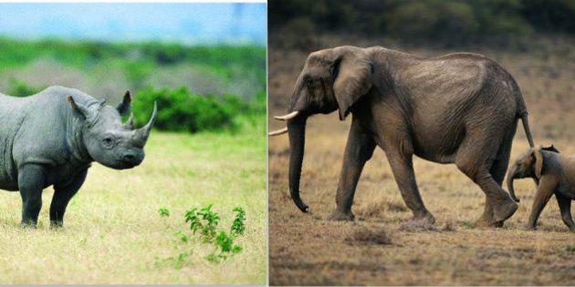 サイの角や象牙の密猟が止まらない