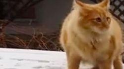飛べなかったネコ【動画】