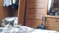 思わず笑っちゃう「ベッド猫」【動画】
