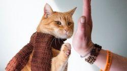 茶トラの野良猫、ホームレスの青年を救う【画像】