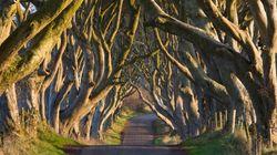 神秘的で美しいアイルランドの道路