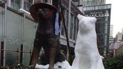 大雪の渋谷の街に「2匹目のハチ公」が登場