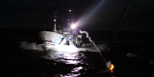 シー・シェパード、日本の調査捕鯨船に信号ロケット弾を発射