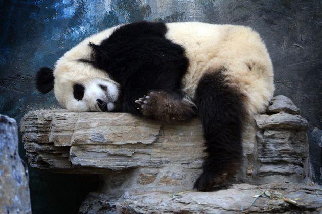 気持ちよく眠る動物たちと「睡眠の名言」集