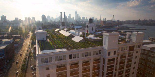 NYにある「世界最大の屋上農園」(動画)