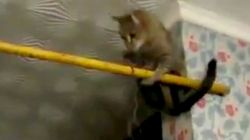 何かに飛びつこうとするが、結果どんくさい猫たち【動画】