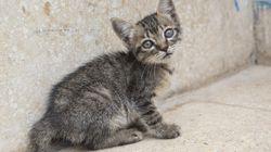 真っすぐな瞳でこちらを見つめるキューバの猫たち【画像集】