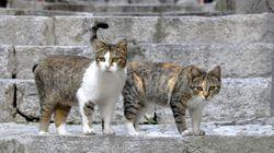 シチリア島の猫たちは仲良く散歩する【画像】
