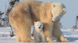 見よ。こんなにも美しい、大自然と動物の営みを【画像】