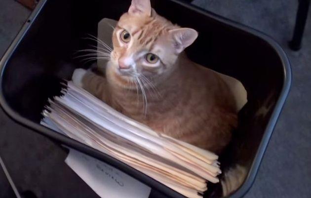 猫2匹といっしょに仕事にするとこうなる(画像)