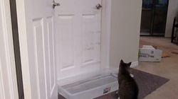 【ねこ動画】自分でドアを開けるうちの猫に意地悪してみた