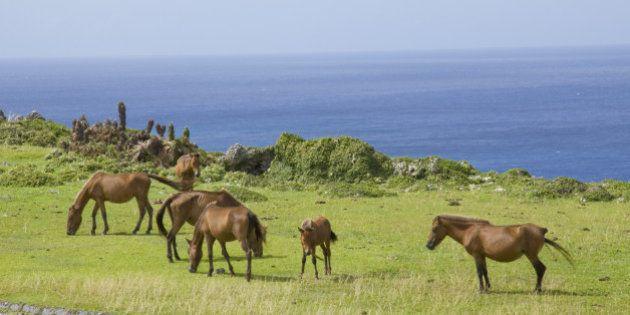 horse,animal,ocean,island,Yonaguni