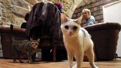 パリに暮らす猫は、あたりまえのようにお洒落だった【画像集】