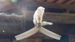 猫を超える