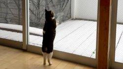 雪の日、猫が「外に出たい」といったので......【画像】