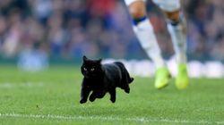 ピッチに颯爽と現れた黒猫。キレッキレの動きに「彼と契約しろ!」の大合唱