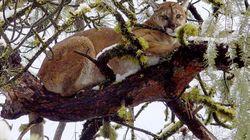 野生のピューマに襲われた男性が素手で撃退。コロラド州の自然公園でバトル