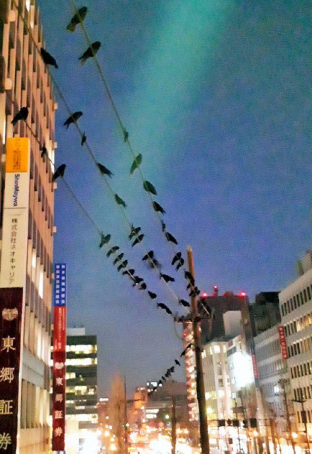 数百メートルにわたって電線に連なるカラス=熊本市中央区花畑町