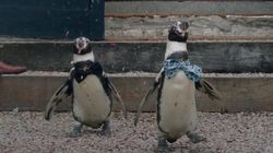 Inseparable Gay Penguins Wed In Lavish