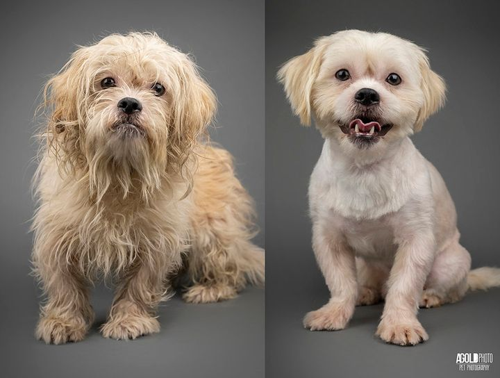 before and after dog