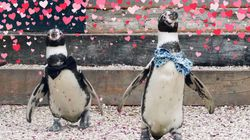 From Penguin Weddings To Cuddling Cats – Animals Are Truly Embracing The Love This