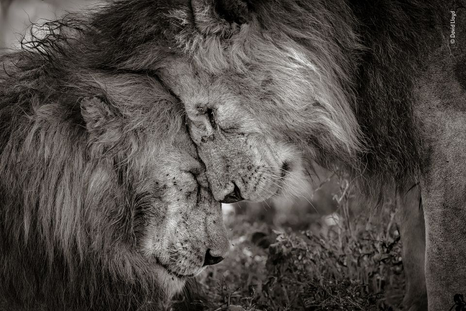 Wildlife Photographer Of The Year's Winning Photo Is A Valentine's Day