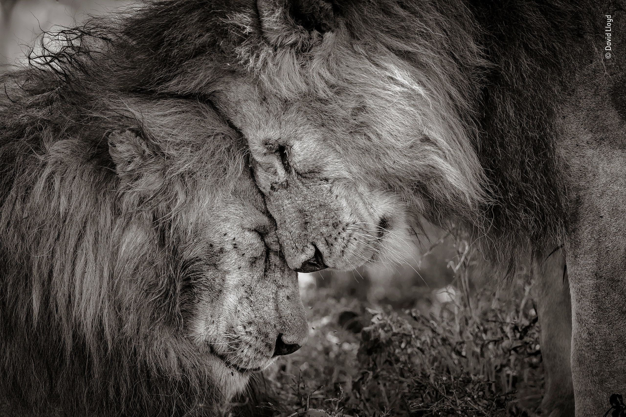 Wildlife Photographer Of The Year's Winning Photo Is A Valentine's Day Treat