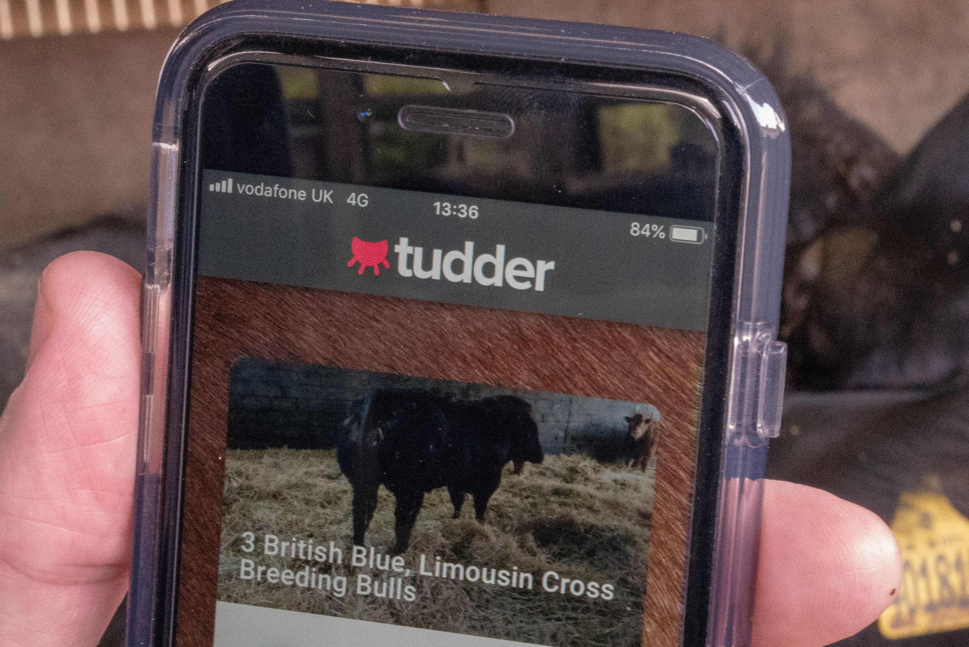 Read: New Tinder-like App Helps Farmers Match Livestock For Love