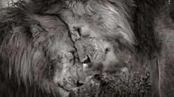 동물들의 감정과 아픔을 보여주는