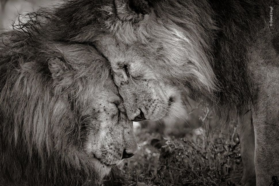 동물들에게도 인간처럼 감정과 아픔이 있다는 걸 보여주는