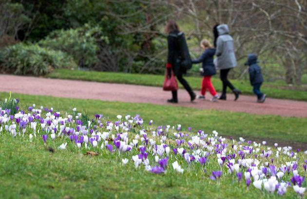 Crocus flowers in the Royal Botanic Garden, Edinburgh.