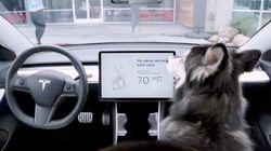 愛犬家に朗報。テスラが発表した「ドッグ・モード」とは?(動画)